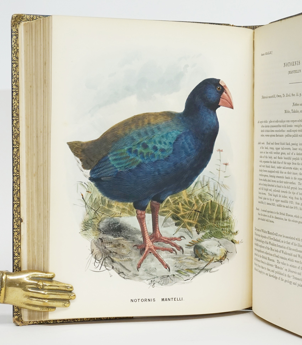 A History of the Birds of New Zealand. Ill. J. G. Keulemans. London: John Van Voorst, 1873.